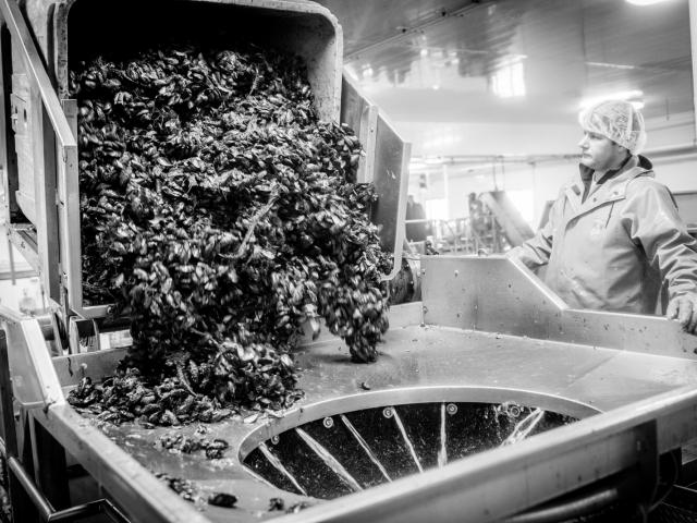 PEI Mussel King plant worker