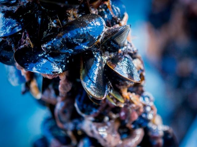 Mussels Socks
